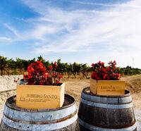 Winery 2