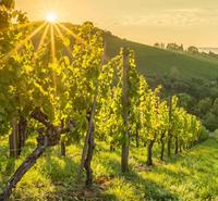 Vinhos Verdes 0